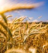 Unleavened Bread | World Esther